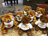 Hard Rock Bears (Lot of 13) GAINESVILLE