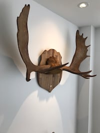 Canadian Moose Antlers 18 Point !!