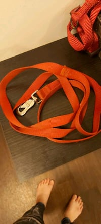 Dog leash, collar and harness  Edmonton, T6W 2C3