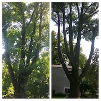tree pruning service