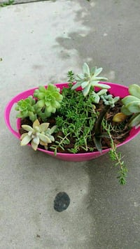 green leaf plant with pink plastic pot