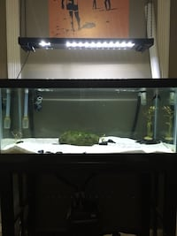 40 gallon fresh water aquarium with canister filter, lights,food, water conditioner, etc... West Palm Beach, 33411