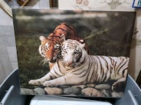 Large tiger poster (in plastic) new Edmonton, T5S 2B4