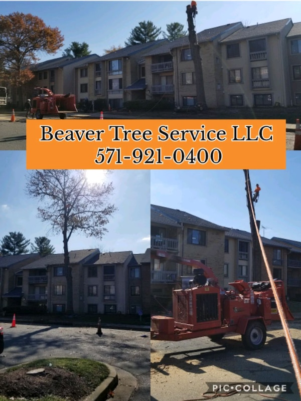 Tree Services 7de7b25f-1885-40bc-8d92-32dd26f86604