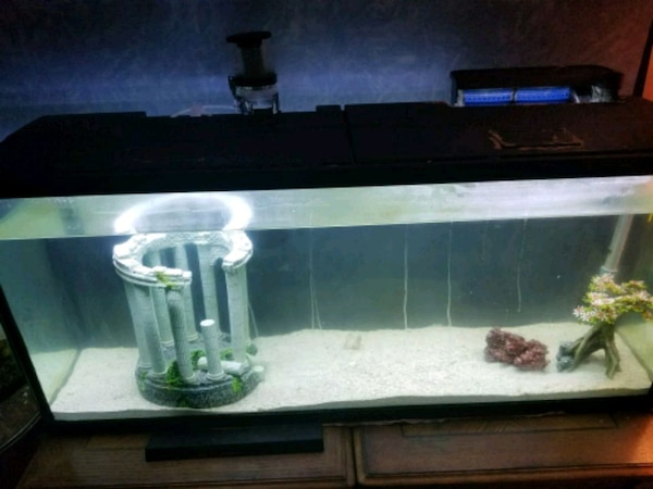 Used 55 Gallon Saltwater Tank For Sale In High Point