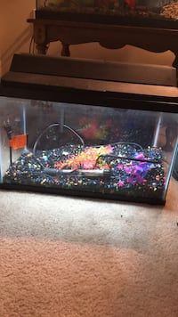 10 gallon fish tank kit Charles Town, 25414