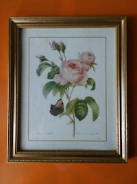 (VERY GENTLY USED) ROSA CENTIFOLIA PICTURE:$10 OBO Fort Wayne, 46803