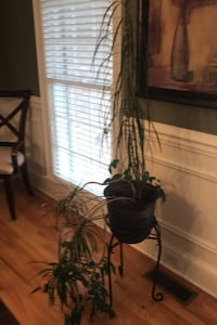 Plant with stand