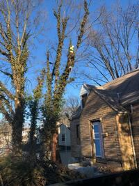 Tree cutting Hyattsville