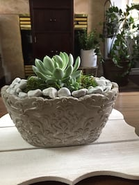 BEAUTIFUL HEALTHY EASY TO CARE SUCCULENT IN A SHABBY CHIC POT New Westminster