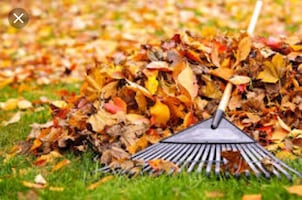 leaf raking and yard cleaning