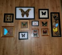 Real butterfly specimens collection  Garland, 75043