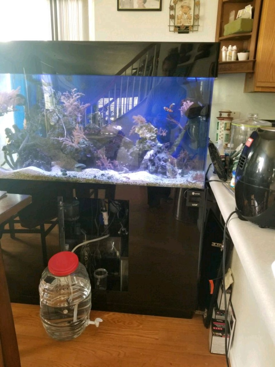 Photo 90 gallon saltwater tank including everything ready to go