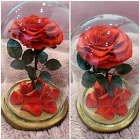 PRICES ARE FIRM Preserved Dome Roses - Birthdays, Christmas ETC Toronto, M4B 2T2