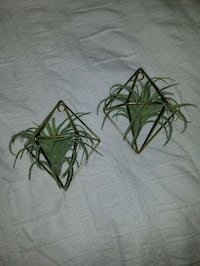Two brass colored plant wall hangers Long Beach, 90805