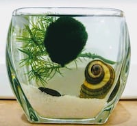 Real Marimo Moss Home Decoration Decor Rancho Cucamonga, 91739