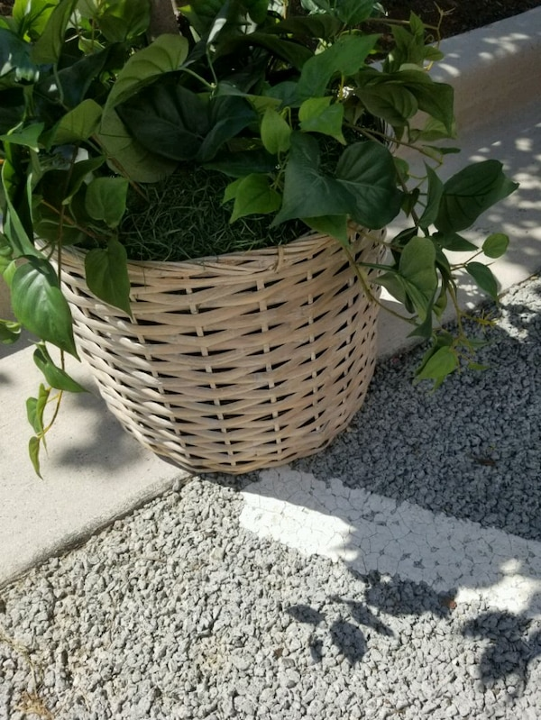 Artificial Ficus tree with moss and woven basket a941beef-1afa-4736-9af4-69a7a9915492