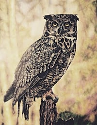 Great Horned Owl - Limited Edition Print! Toronto, M9B 3C8