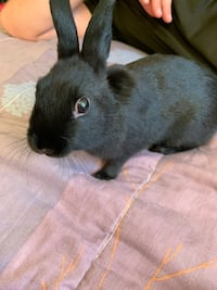 Pet sitting your little furry friend Mississauga, L4T 1Y2