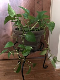 Pothos Plant; with plant stand Germantown, 20874