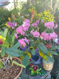 assorted colored potted flowers