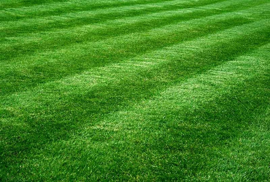 Offering:lawn mowing d6070ac8-5f1d-41a2-be62-29db98f717c8