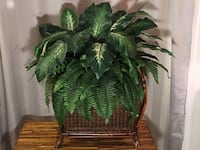 Large Artificial Plant is Woven Wooden Basket  Lansdowne
