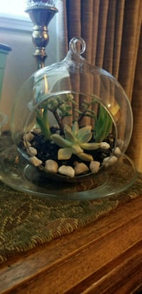 green leaf plant in clear glass bowl Bakersfield, 93307