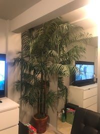2 for $60 palm tree artificial plants Washington, 20005
