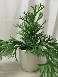 Threshold Tabletop Artificial Potted Trailing Green Fern Ceramic Pot  Chattanooga
