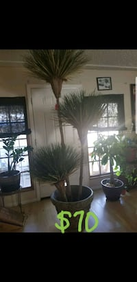 Custom indoor plant Las Vegas, 89108
