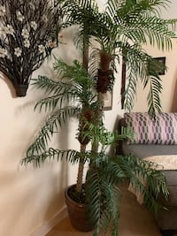 Artificial Palm Trees with ceramic pot  each $85 or both for $150 Arlington, 22207