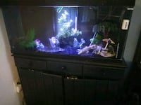 Beautiful fish tank with all the accessories