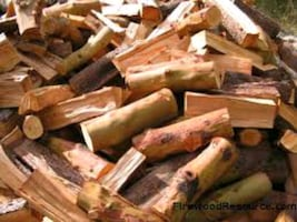 Madrone. Fire wood
