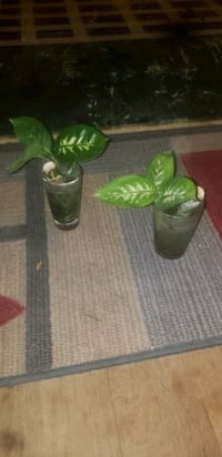House plants--pricing listed in description some price negotiable