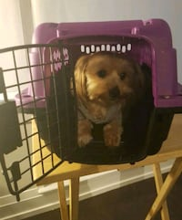 Pet Transport Crate up to 6.5 Lbs Toronto, M3J 0G7