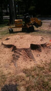 tree stump and root removal Norfolk