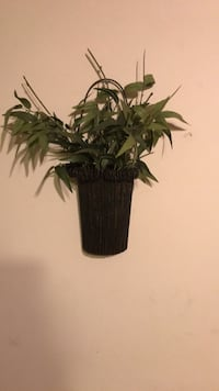 green leaf plant with black pot null