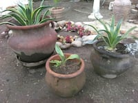 All potted plants Fresno, 93723