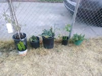 Potted Plants for sale!$10! Sacramento, 95838
