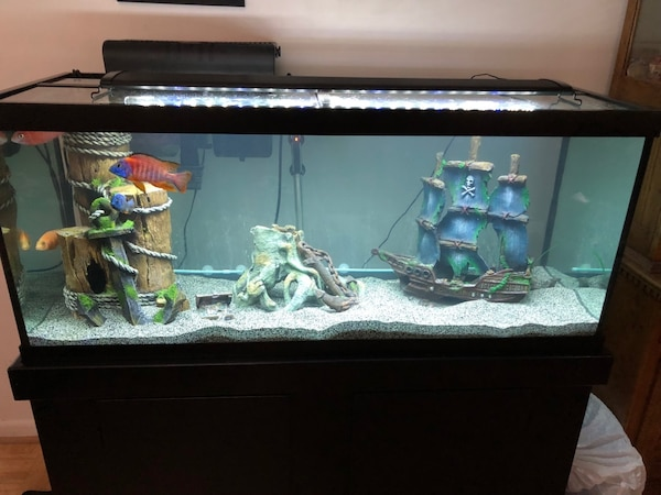 65 Gallon Fish Tank &Stand