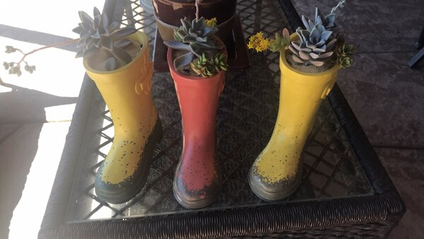 1e3002c3a Used Boots   Succulents for sale in Victorville - letgo