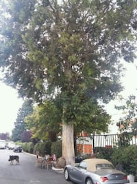 Tree cutting Brentwood