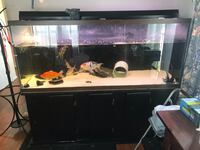 225 gallon fish tank with fish and turtle Germantown, 20874
