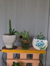 Small/ cute pot and plants