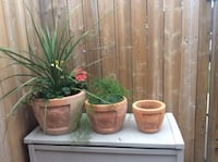 3 x STAMPED terracotta sunflower planters (see pics ) HEAVY duty Oakville