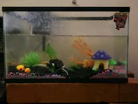 rectangular black framed fish tank Pico Rivera, 90660