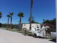 Palm tree trimming and Removals Thornton