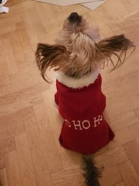 Dog st Claus outfit Stockholm, 112 34