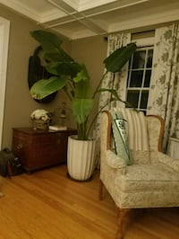 Large House Plant with Great Ceramic Pot